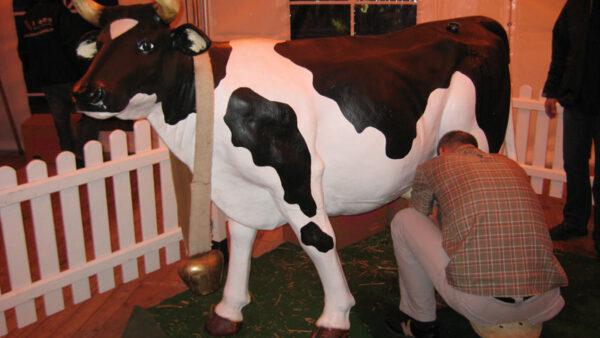 Melk die Kuh mieten