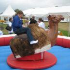 kamel rodeoreiten mieten