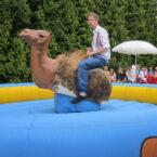 kamel rodeoreiten verleih